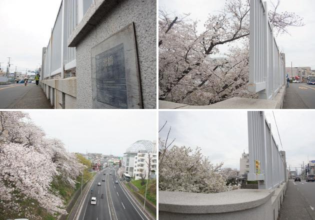 横浜市鶴見区 響橋と桜