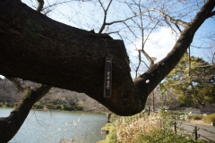 mitsuike20190321-07
