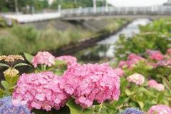 ooshimizu-20190608-03