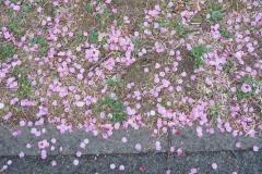 shinnyokoekimaekouenn20190323-04