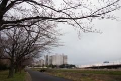 shinnyokoekimaekouenn20190323-05