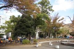 横浜公園 チューリップの植えつけ