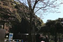 yokohamakouen20190320-01