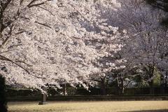 soujiji20190403-08
