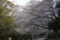 soujiji20190403-10