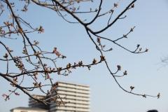 fujisawa20190330-04