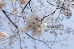 fujisawa20190330-05