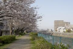 fujisawa20190330-06