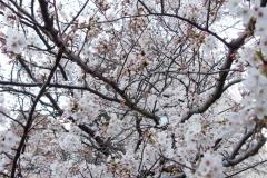 fujisawa20190330-07