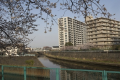 fujisawa20190330-08