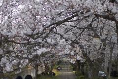 fujisawa20190330-09