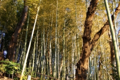 馬場花木園 竹林