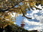 横浜公園 青空に黄色い銀杏が映える。