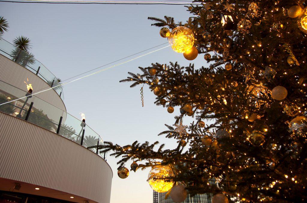 本物のモミを使った横浜ベイクォーターのツリー