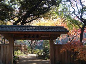 横浜公園 彼我庭園の美しい紅葉