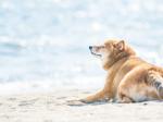 海岸に佇む犬