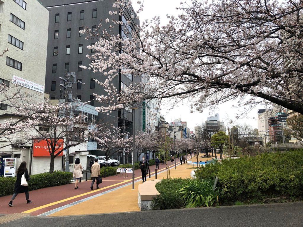 大井水神公園の桜並木