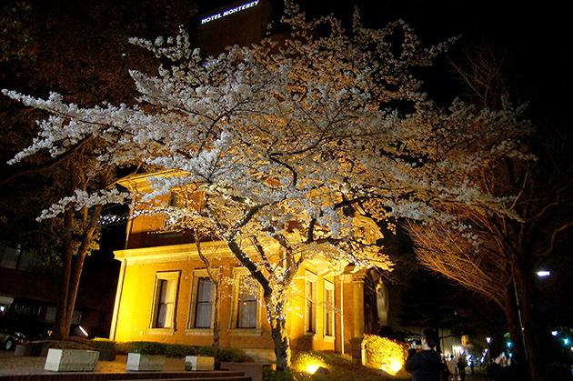 旧英国七番館 夜桜