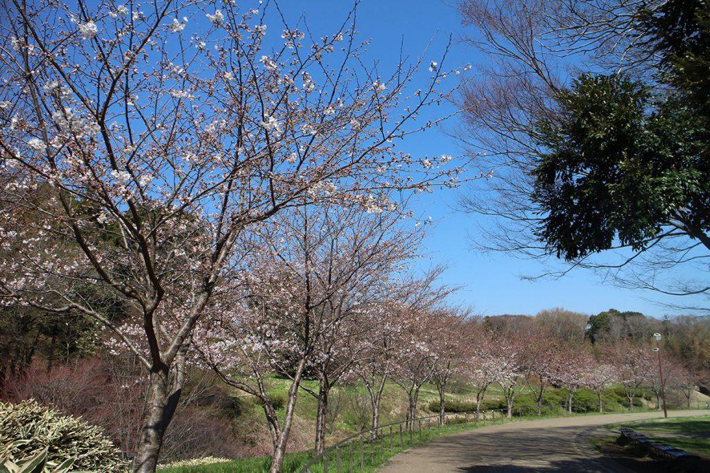 茅ヶ崎市 里山公園