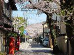 鶴岡八幡宮から荏柄天神に向かう路地裏の桜