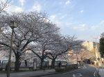 大岡川沿い 蒔田公園入り口