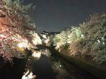弘明寺 大岡川プロムナードの夜桜