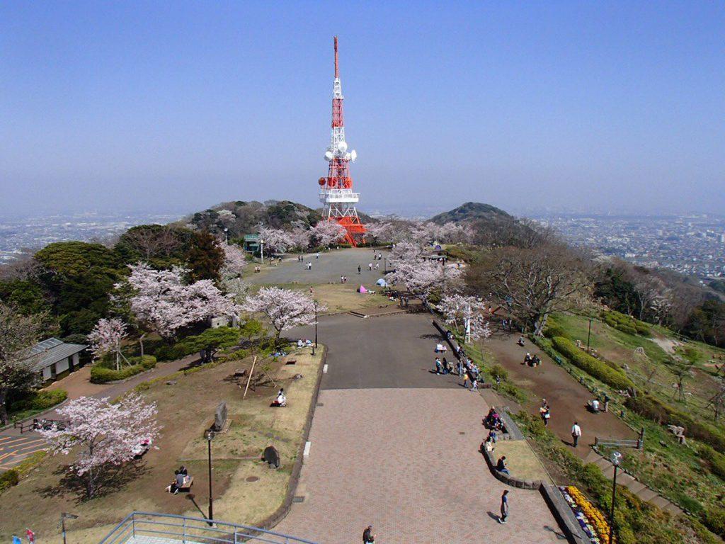 湘南平 高麗山公園の桜