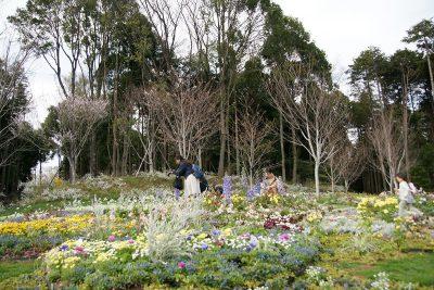 都築区里山ガーデンの桜