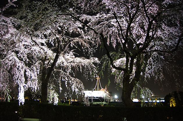 山下公園 夜のしだれ桜と氷川丸