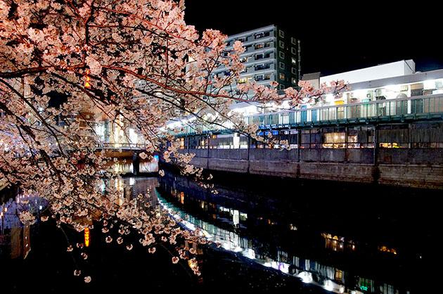 野毛 大岡川に架かる都橋の桜