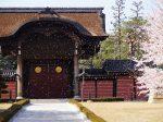 総持寺 向唐門の桜