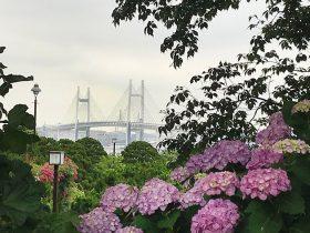 イングリッシュローズガーデンから横浜ベイブリッジを望む