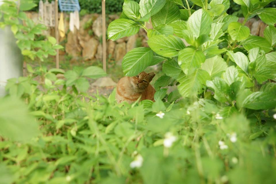 曹洞宗大本山總持寺、梅壽庵(ばいじゅあん)脇の小道の猫