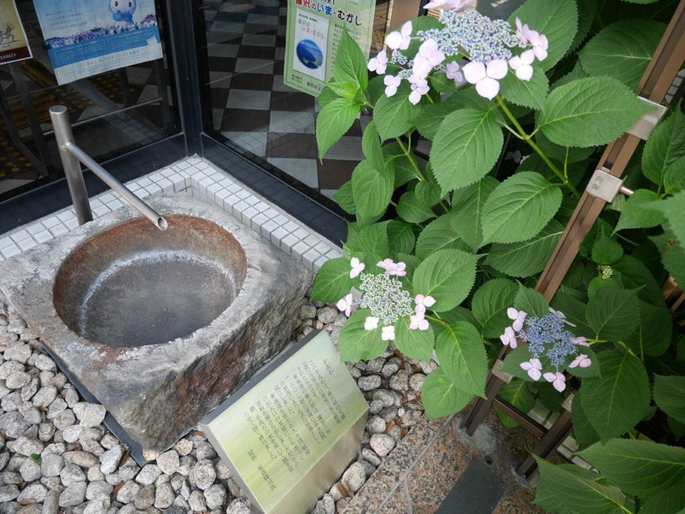 藤沢市文書館に咲くガクアジサイ