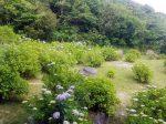 鎌倉プリンスホテルのラウンジ「あじさい」から眺めるアジサイ