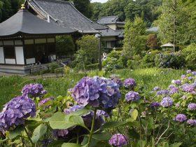 天台宗 長窪山総泰院 正覺寺 あじさい寺として親しまれている文禄2年(1593)創建のお寺