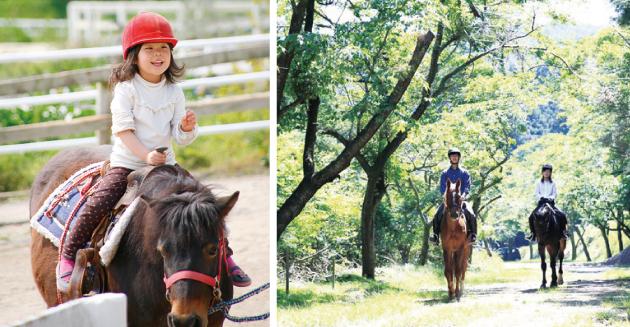 多摩丘陵の東端に位置する緑豊かな「乗馬クラブ クレイン東京」