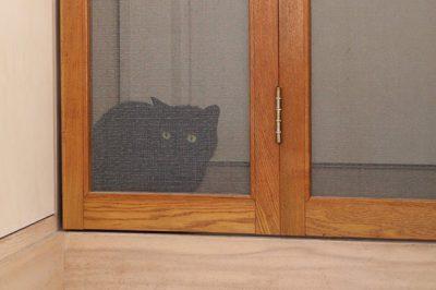 店の名前にもなっている黒猫のノワールちゃん