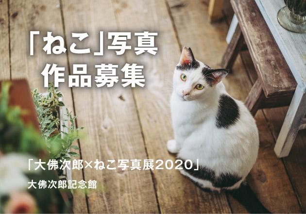 【作品募集】大佛次郎記念館「大佛次郎×ねこ写真展2020」展覧会