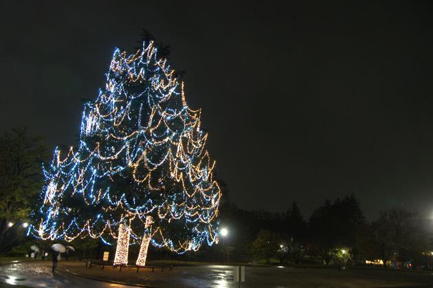 美しが丘公園 高さ25メートルの巨大ヒマラヤ杉に約2万個のLEDで装飾した迫力のツリー
