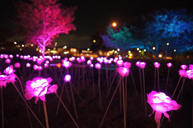 NIGHT SYNC YOKOHAMA 新港中央広場のフラワーイルミネーション