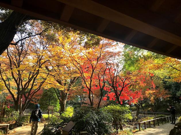横浜公園 彼我庭園の紅葉も盛りに