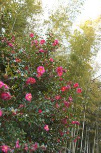 冬の県立三ツ池公園