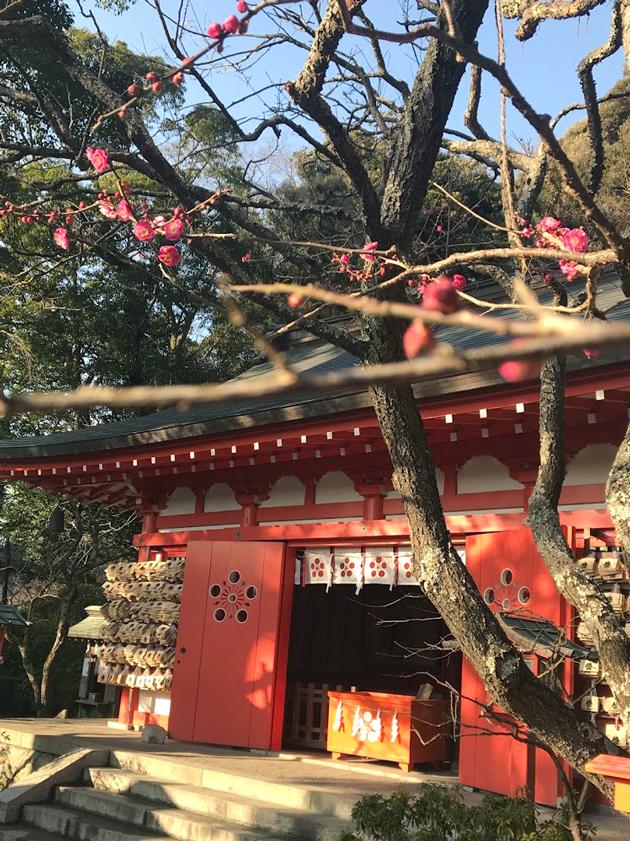 荏柄天神社 神紋に梅を用い、境内には菅原道真にちなんで多くの梅の木が植えられています