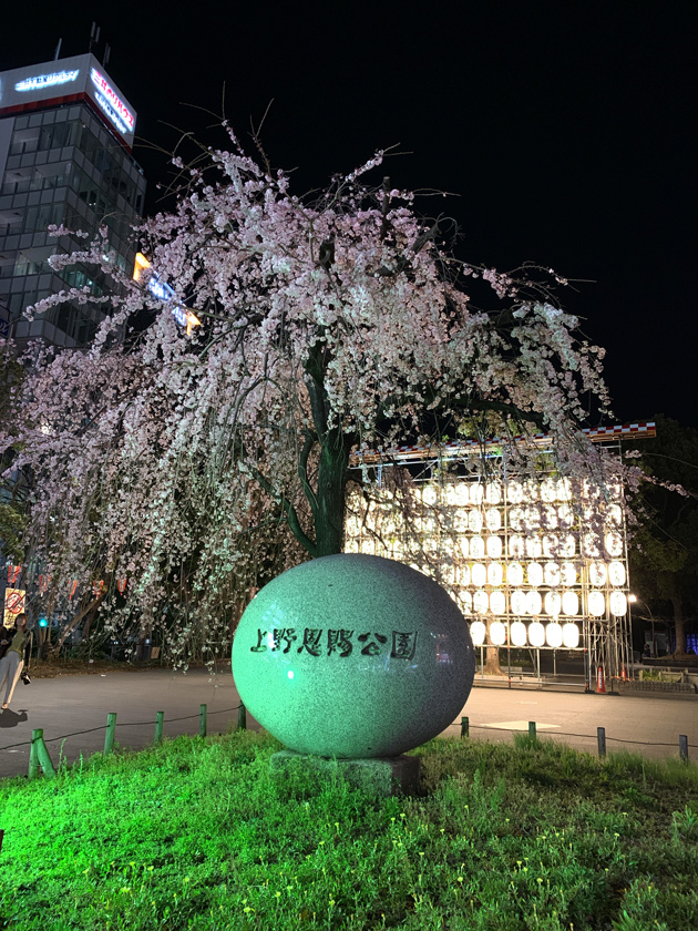 上野恩賜公園の入り口のしだれ桜