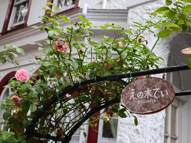 えの木てい 本店の秋バラ