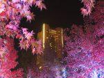 横浜 グランモール公園の紅葉とイルミネーション