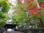 紅葉が始まった北鎌倉 円覚寺