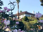 横浜山手 バラとカスケードの庭からイギリス館を望む