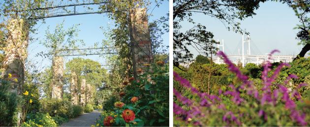 港の見える丘公園 イングリッシュローズの庭